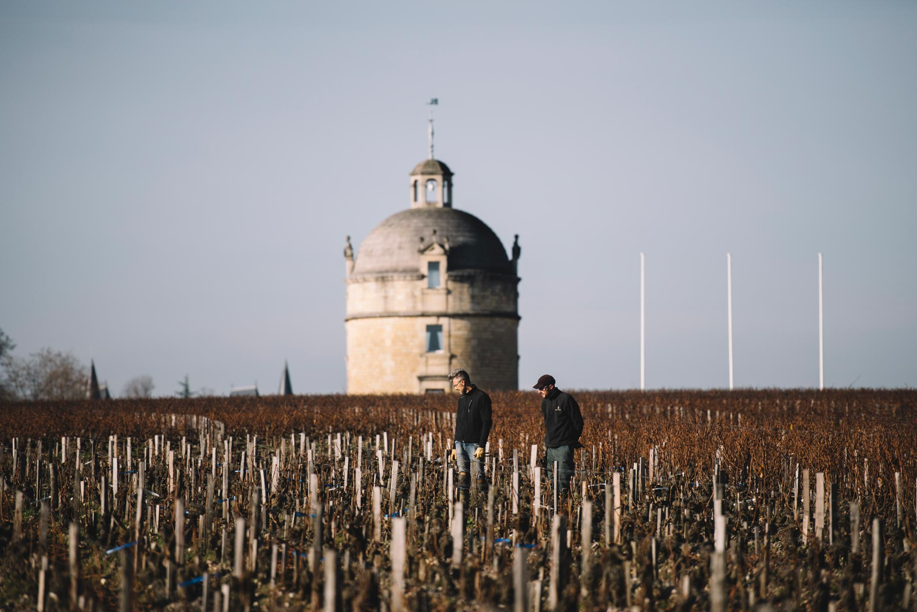 On field training    Château Latour   Pauillac   Bordeaux