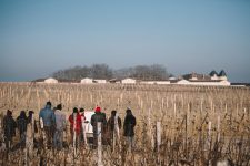 Winter training | Château d'Yquem | Sauternes | Bordeaux