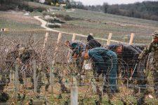 On field tutoring | Domaine Leroy | Richebourg | Bourgogne