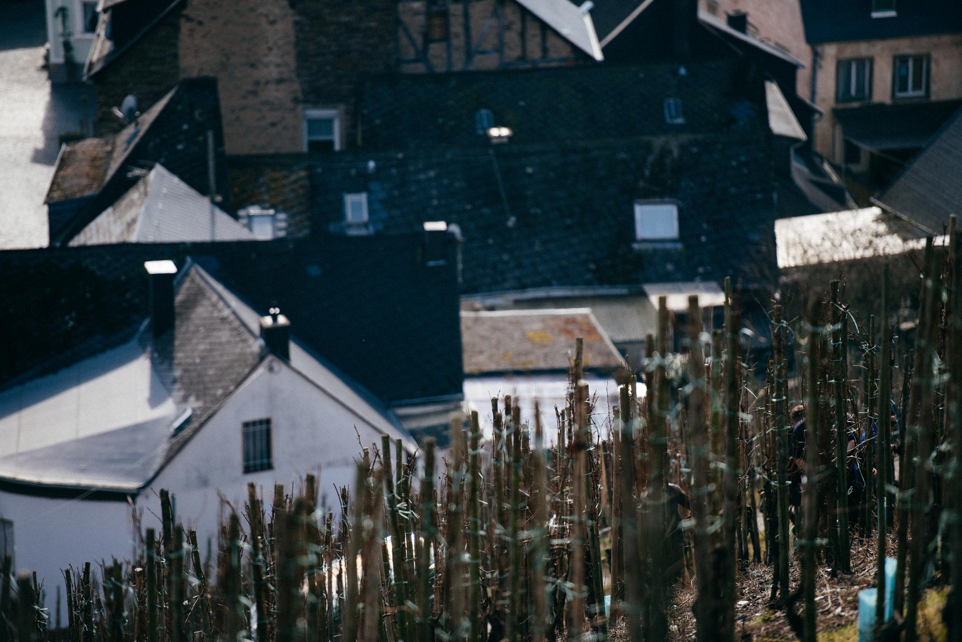 Vigneto Shmitt, Selbach Oster, Mosel, Germany