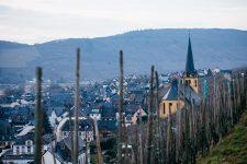 Zeltingen, vigneto Shmitt, Selbach Oster, Mosel, Germany