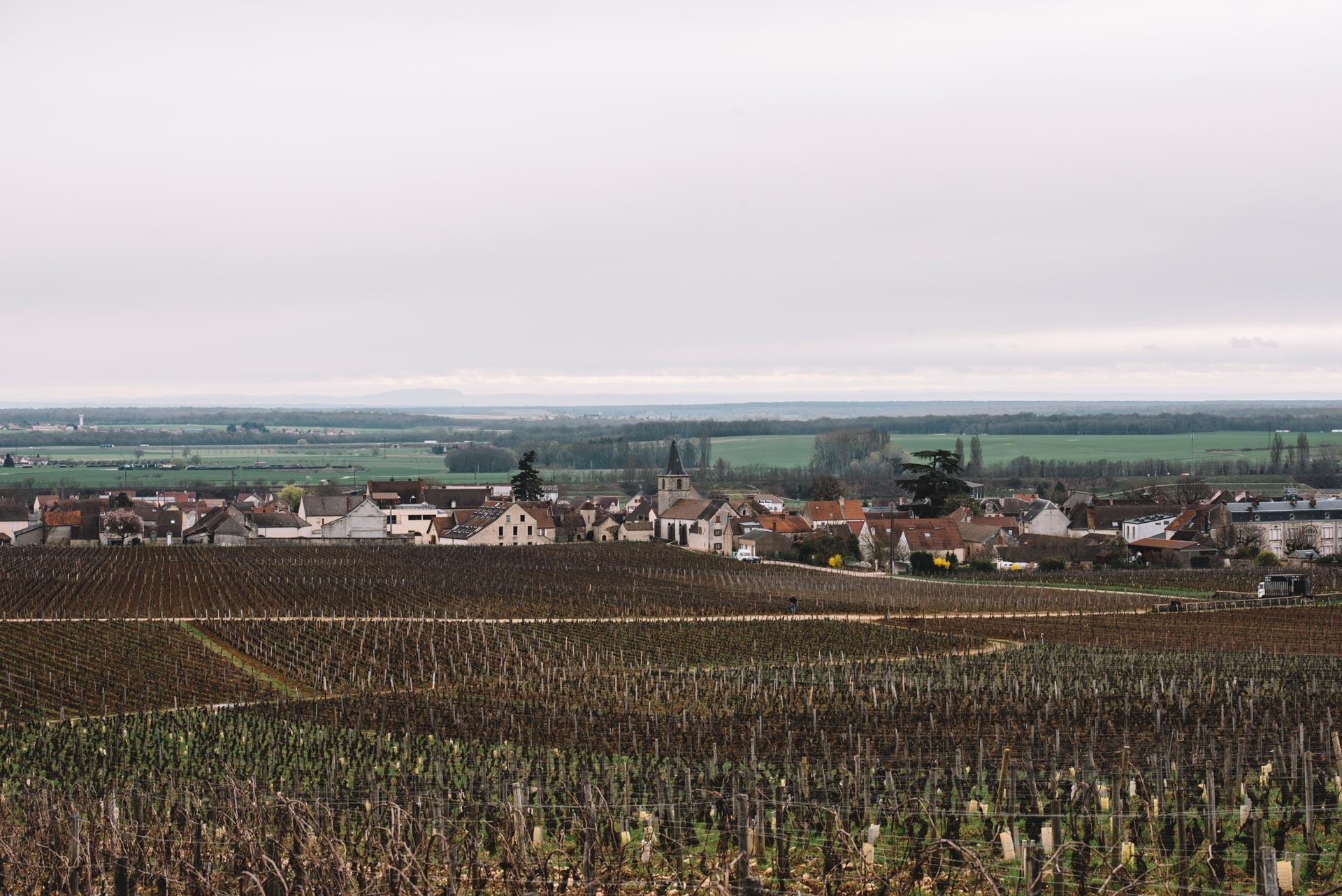 Vosne-Romanée | Bourgogne