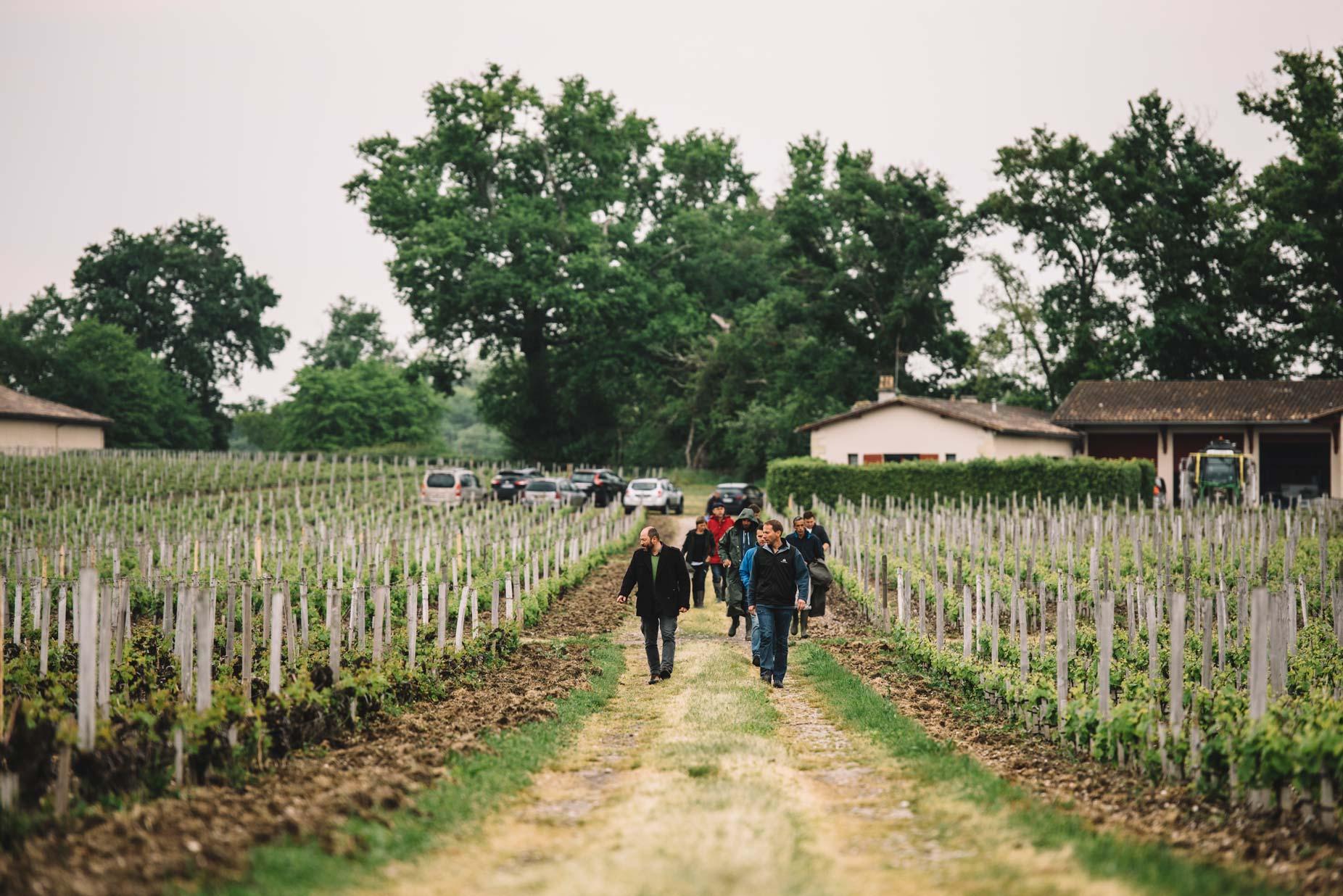 Spring training   Château Haut-Bailly   Pessac   Bordeaux