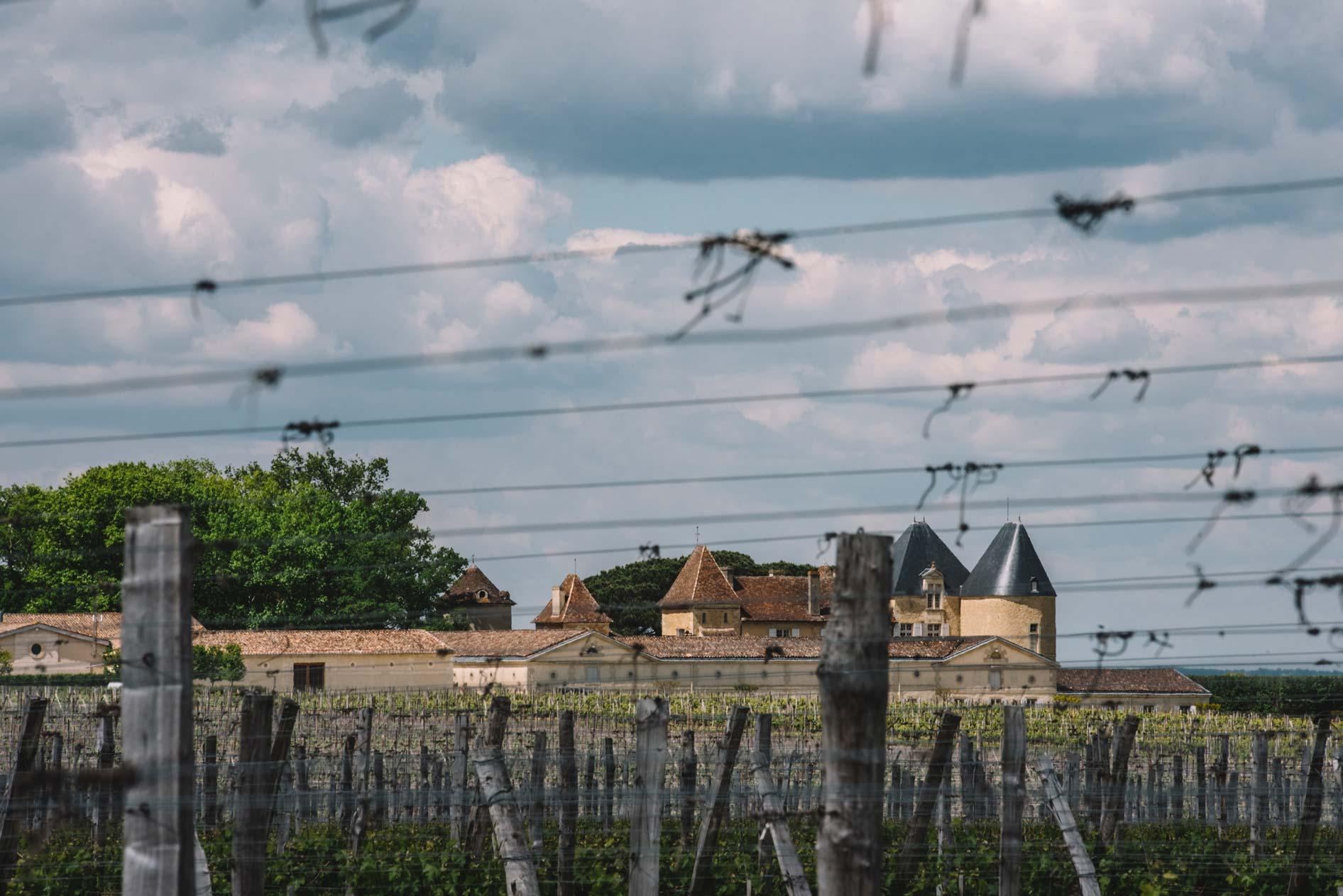 Spring training   Château d'Yquem   Sauternes   Bordeaux