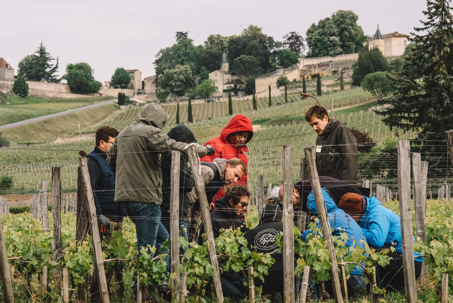 Spring training   Vignobles Vauthier Mazière   Saint-Émilion   Bordeaux