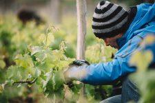 Spring training | Vignobles Vauthier Mazière | Saint-Émilion | Bordeaux