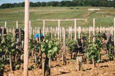 Spring training | Domaine Leroy | Romanée Saint Vivant | Bourgogne