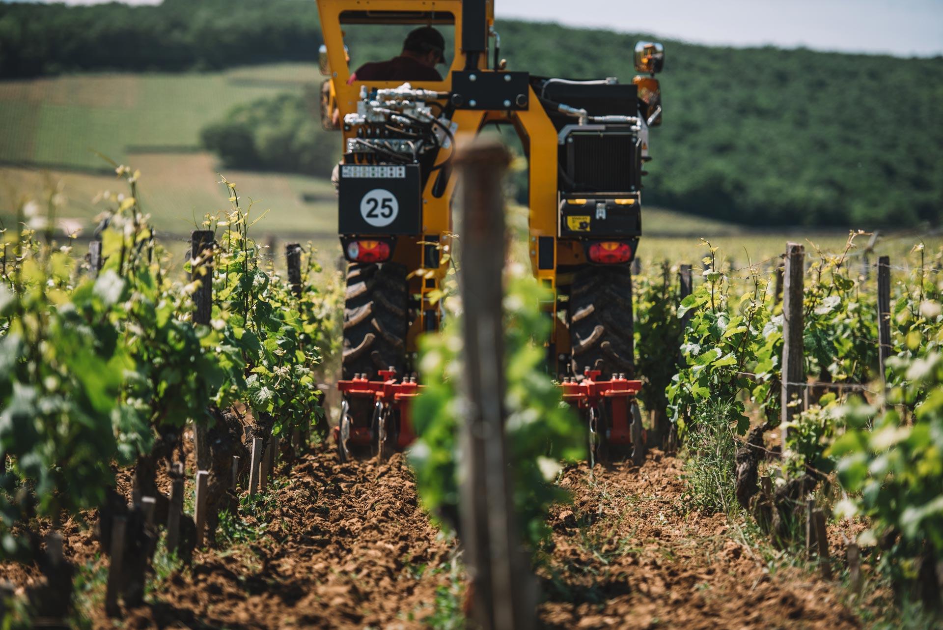 Soil working | Domaine Leroy | Clos de Vougeot | Bourgogne
