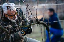 Formazione invernale | Bellavista | Franciacorta