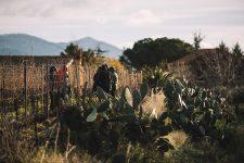 Winter pruning training | Tenuta delle Terrenere | Etna | Sicily